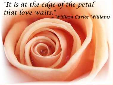 At the edge of the petal - love waits